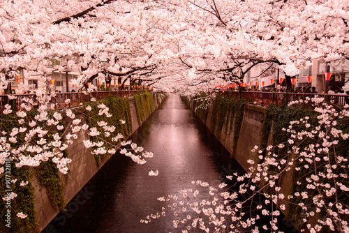 Poster 目黒川の桜