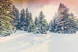 Fototapety Winter landscape, snow-covered trees in Swiss Alps, filtered