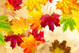 Fototapety bunte Blätter im Wind