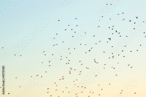 Silhouettes of birds in the sky - 90787615