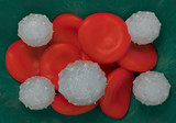 red blood cells,activated platelet and white blood cells microscopic photos poster
