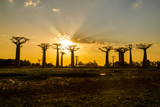 Sunset above Baobab avenue