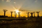 Sunset above Baobab avenue