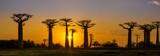 Panorama widok na zachód słońca nad Baobab alei