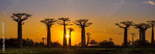 Aluminium Baobab Panorama view at sunset above Baobab avenue