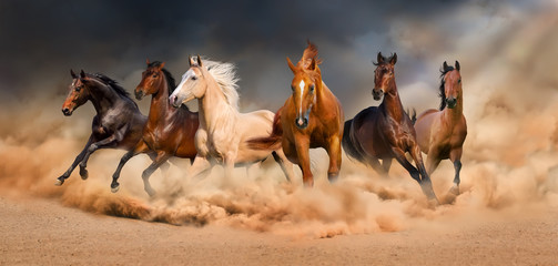 Horse herd run in desert sand storm against dramatic sky