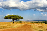 Fototapety Landscape with tree in Africa