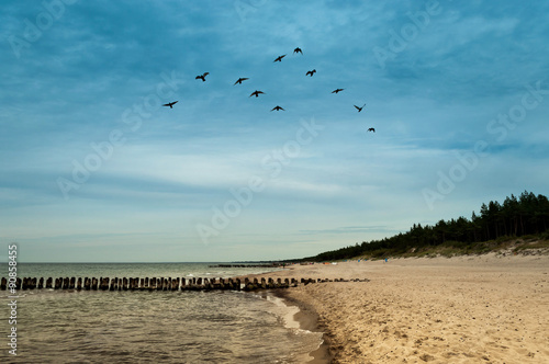 latające ptaki w grupie