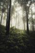 sun light beam in misty forest