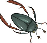 water scavenger beetle on white background poster
