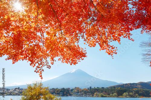 Fototapeta 紅葉と富士山