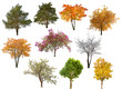 Obrazy na płótnie, fototapety, zdjęcia, fotoobrazy drukowane : collection of ten isolated trees