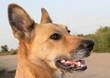 Постер, плакат: Непородистая собака потеряла своего хозяина