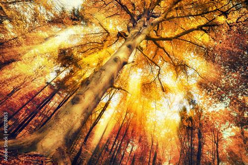 Papiers peints Orange eclat Enchanting forest scenery in autumn