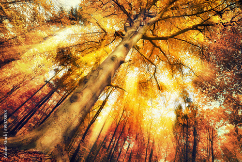 Enchanting forest scenery in autumn Plakat