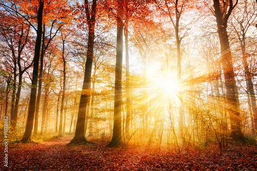 Beautiful autumn sunlight in a forest Plakat