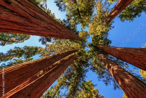 Fotobehang Bruin Giant tree closeup in Sequoia National Park