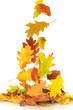 Herbst 66