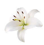 lily flower. Isolated. - Fine Art prints