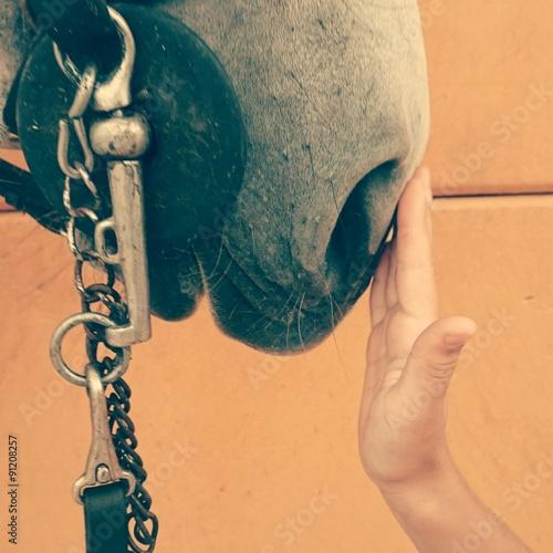 Aluminium Exclusieve Mano acariciando caballo