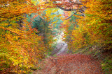 Fototapety Silent Autumn forest - colorful vibrant leaves and trees,
