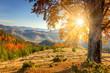 Obrazy na płótnie, fototapety, zdjęcia, fotoobrazy drukowane : Early Morning Autumnal Landscape - yellow old tree against the