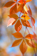 Beautiful Autumn leaves on defocused background - gentle
