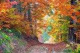 Fototapety Beautiful vibrant Autumn Fall Leaves colors in forest