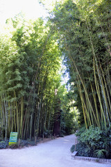 An alley of the park bamboo Anduze © Gilles Paire