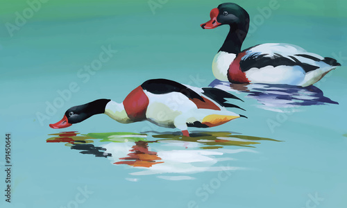 Geese flock swimming on pond watercolor vector illustration - 91450644