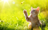 art Young cat / kitten hunting a ladybug with Back Lit - 91494822