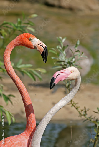 Staande foto Kameleon Flamingos in a Zoo