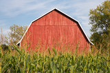 Red Barn Behind Tall Corn