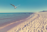 Fototapety Baltic sea beach landscape with blue sea white sand and seagull