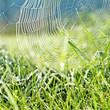 dewy grass and dewy spider net - mornig meadow - background