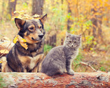 Fototapety Dog and cat best friends sitting together outdoors in autumn forest