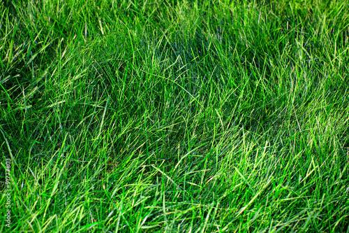 Green grass. - 91777803
