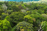 The Amazon forest in Brazil