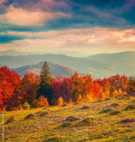 Fototapeta Colorful winter sunrise in the Carpathian mountains.