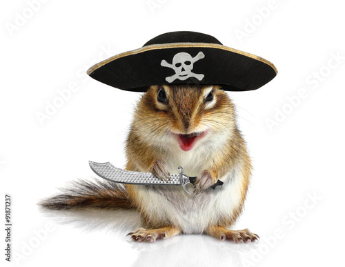 Poster Funny animal pirate, squirrel with hat and sabre