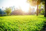 Fototapety green park under sunshine