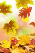 Herbst 53