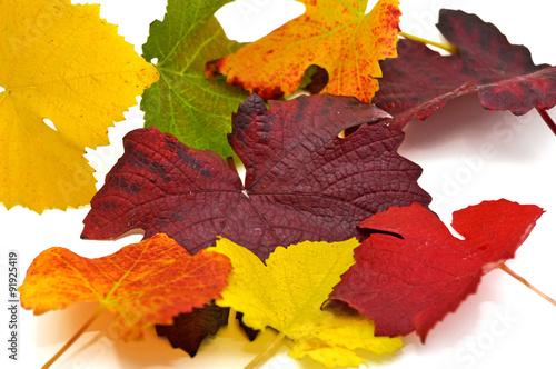 Leinwanddruck Bild Weinlaub in vielen verschiedenen Farben
