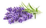 Lavender - 92016829