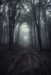 mysterious light in foggy forest