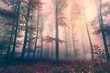 Grunge beautiful red colored foggy forest landscape background. Grunge filter effect used.