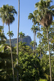 Corcovado Mountain stands in the distance beyond royal palm trees at the Jardim Botanico botanic gardens in Rio de Janeiro Brazil poster