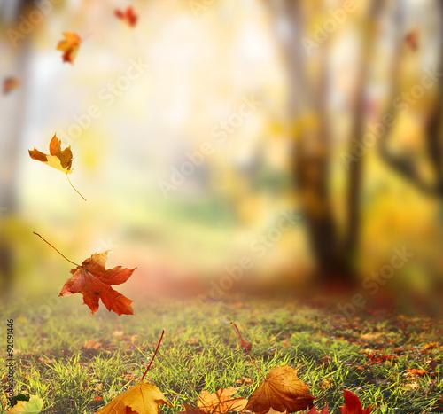 Deurstickers Honing Falling Autumn Leaves background