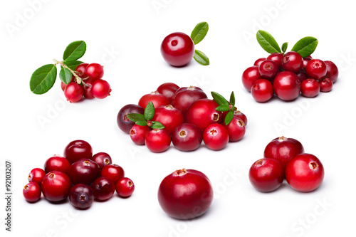 Poster Cranberry,foxberry (lingonberry) isolated set