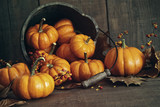 Fall still life with small pumpkins in bucket